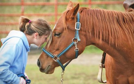 Newport Academy Treatment Resources: Equine Assisted Therapy