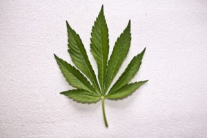 Identifying drugs: Marijuana Leaf