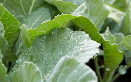 Newport Academy mental health resources: benefits of gardening