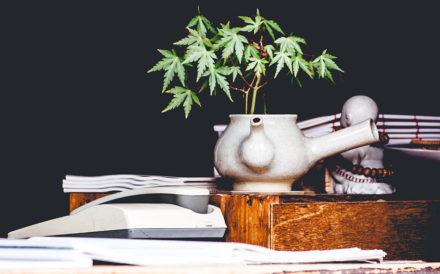 Newport Academy Substance abuse Resources: marijuana paraphernalia