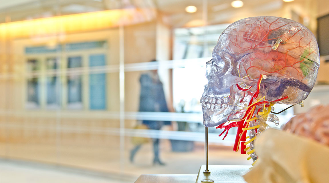 Newport Academy Resources Mental Health: teen brain development