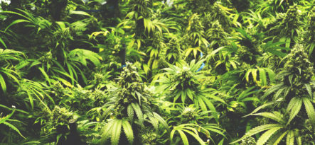 Newport Academy Substance Abuse Resources: Marijuana Rehab Street Names