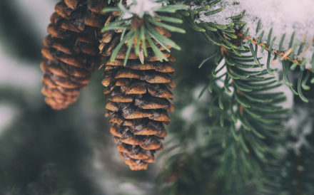Pinecone Tree - Healthy Holiday Traditions