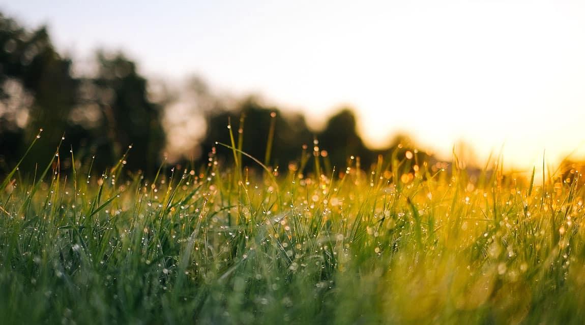 SELF: Morning_Dew_Grass_Newport_Academy